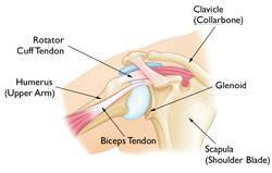 Anatomia normale della spalla